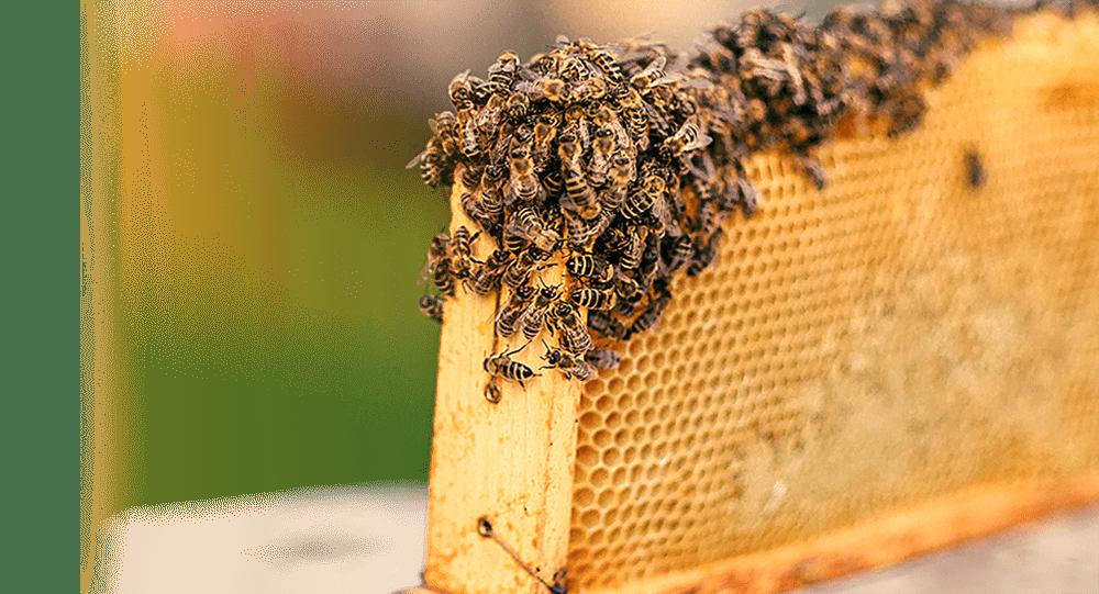 sweetB-Honey_beehive1